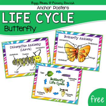 Butterfly life cycle worksheet 4th grade