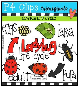 Ladybug Life Cycle  {P4 Clips Trioriginals Digital Clip Art}