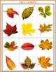 #dealsinoctober Autism Matching File Folders - Fall