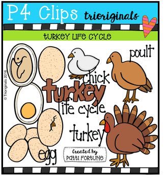Turkey Life Cycle (P4 Clips Trioriginals Digital Clip Art)