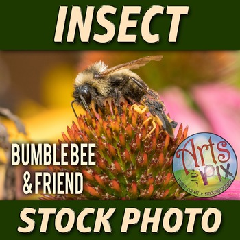 "! ""Bumble Bee and friend"" - Insect - Stock Photo - Macro C"