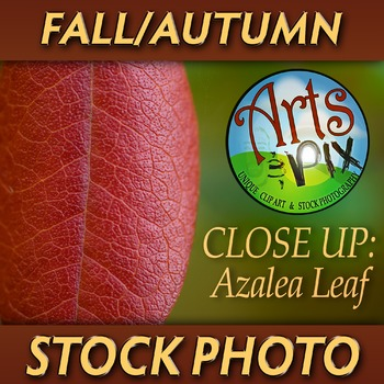 "! ""FALL Azalea Leaf Close UP"" - Photograph - Fall Leaf - S"