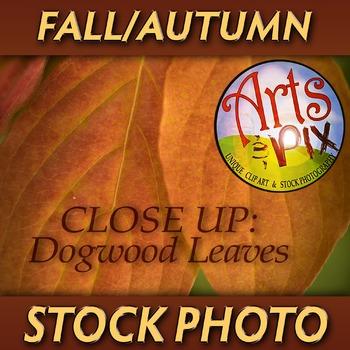 "! ""FALL Dogwood leaves"" - Photograph - Fall Leaves - Stock Photo"
