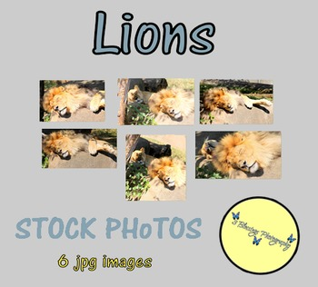 Lions - Stock Photos - Photo Pack Bundle - Zoo Animals