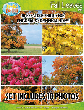 10 Fall Leaves Stock Photos Pack — Includes Commercial License!