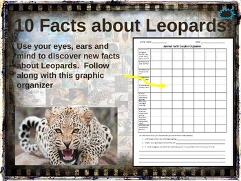 LEOPARDS: 10 facts. Fun, visual, engaging PPT (w links & f