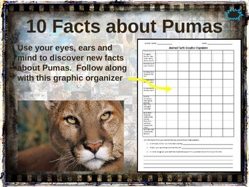 PUMA (COUGAR) - 10 facts. Fun, engaging PPT (w links & fre