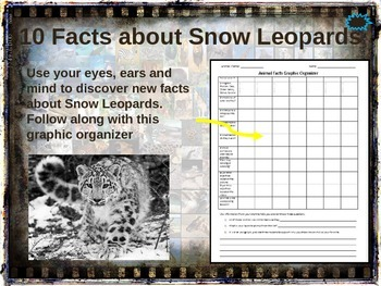 SNOW LEOPARDS - 10 facts. Fun, engaging PPT (w links & fre