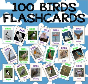 100 BIRDS FLASHCARDS SCIENCE DISPLAY TEACHING RESOURCE EAR