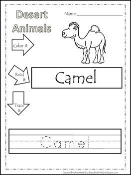 11 Desert Animal themed printable preschool worksheets.  C