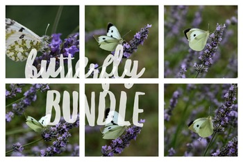 125 - INSECTS - 8 photos - Butterfly and Lavender [By Just