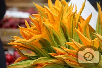 132 - SQUASH FLOWERS [By Just Photos!]