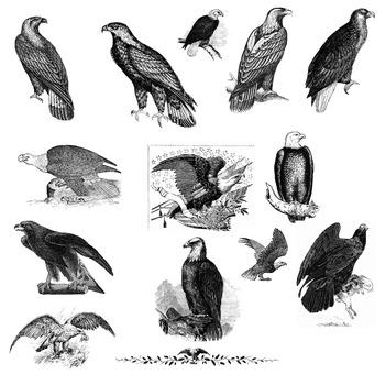 14 eagles clipart