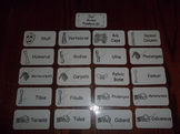 20 Laminated Our Bones Flash Cards.  Preschool Anatomy Pic