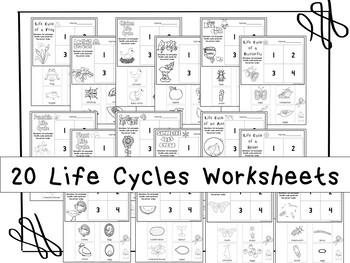 20 Life Cycles Printable Worksheets in a PDF file.Preschoo