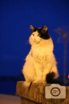 200 - ANIMALS AND BIRDS - CAT [By Just Photos!]