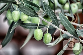 233 - OLIVES [By Just Photos!]