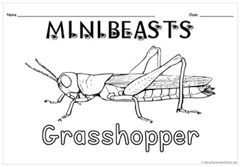 26 Minibeasts/Bugs Colour In Sheets For UK & USA In PDF