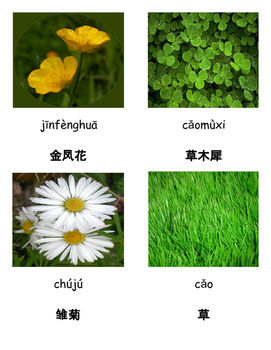 3 Part Cards for Common Plants in Chinese