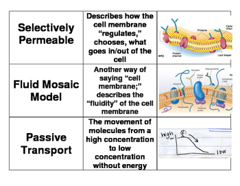 3 Way Match - Cell Processes