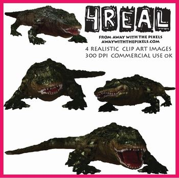 4 Real! 4 Realistic Alligator Clip Art Images from Away Wi
