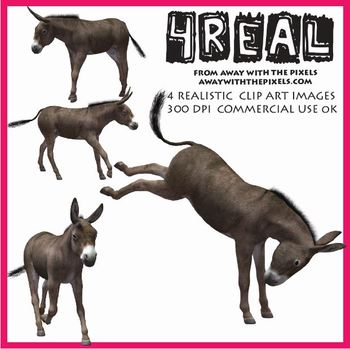 4 Real! 4 Realistic Donkey Clip Art Images from Away With