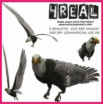 4 Real! 4 Realistic Eagle Clip Art Images from Away With T