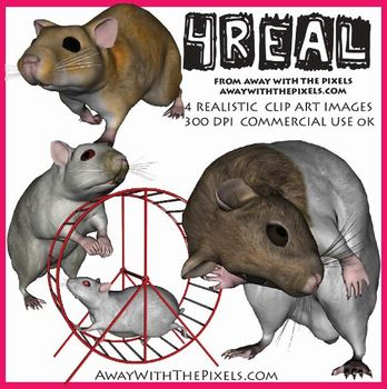4 Real! 4 Realistic Hamster Clip Art Images - Large High Q
