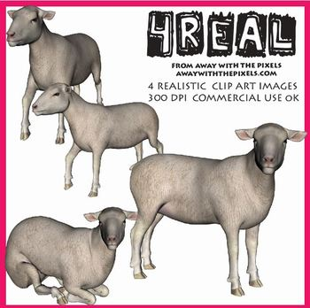 4 Real! 4 Realistic Sheep Clip Art Images - Large High Qua