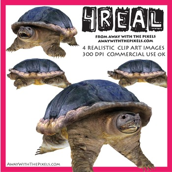 4 Real! 4 Realistic Snapping Turtle Clip Art Images - Snap