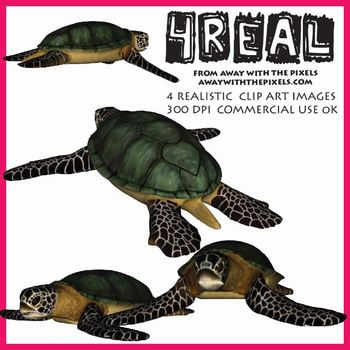4 Real! 4 Realistic Turtle Clip Art Images from Away With