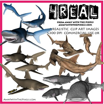 4 Real! Realistic Shark Clip Art - Hammerhead, Blue, Whale