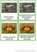 45 Animals Of Africa – Montessori Nomenclature And Informa