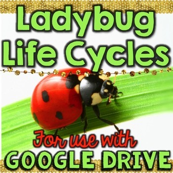 Ladybug Life Cycle for Google Drive & Google Classrooom