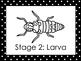 6 Black and White Ladybug Life Cycle Printable Posters/Anc