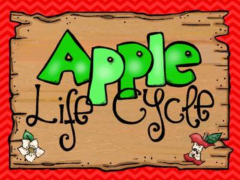8  Apple Life Cycle Printable Posters/Anchor Charts.