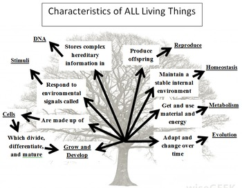 8 Characteristics of Life Tree Graphic Organizer