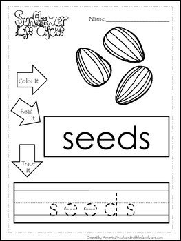 9 Life Cycle of a Sunflower printable preschool worksheets