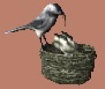 A Birdhouse for Rent by Harriet Ziefert
