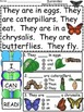 A+ Butterflies... Comprehension: Differentiated Instructio