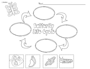 A Butterflies Life Cycle