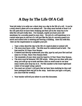 A Day In The Life Of A Cell
