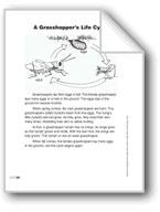 A Grasshopper's Life Cycle (Lexile 650)