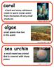 ReadyGen, A House for Hermit Crab Vocabulary, Kindergarten