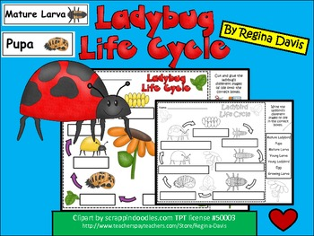 A+ Ladybug Life Cycle Labeling & Word Wall