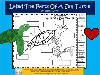 A+ Sea Turtle Labels