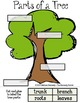 StoryTown Lesson 13 {A Tree is Growing - 3rd Grade}