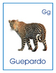 ABC in Spanish Flashcards