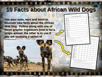 AFRICAN WILD DOGS - visually engaging PPT w facts, video l