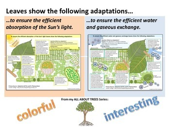 ALL ABOUT TREES: Leaf Adaptations Handouts